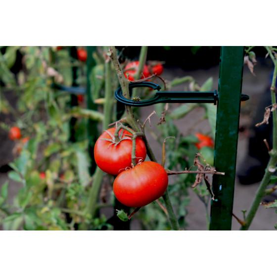Attache pour éco tuteur à tomate en plastique vert sapin (les 6)