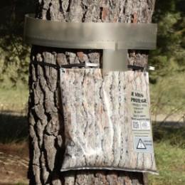 Recharge pour éco piège à chenille processionnaire du pin diamètre 55 cm