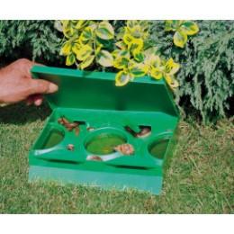 des limaces prises au piège dans une boite anti limace