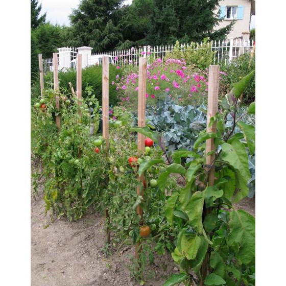 Piquet de tomates en bois 150 cm + cône anti pourrissement