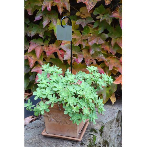 Etiquette de jardin en zinc et support à planter (les 2)