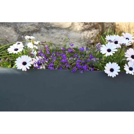 Bordure de jardin en acier gris anthracite H 25 cm encadre des fleurs blanches et violettes